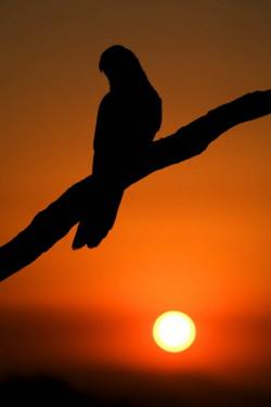 Bird_and_Sunset