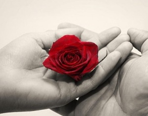 Holding Rose