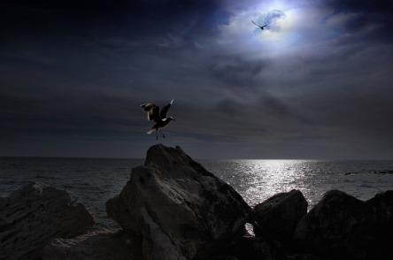 Volo nella notte