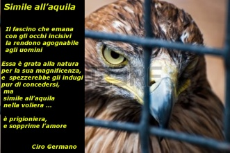 Simile  all'aquila