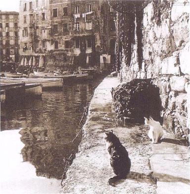 Gatti di Camogli