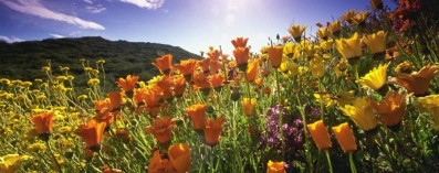 ce-aria-di-primavera-a-bergamo-aprile-inizia-con-bel-tempo-e-il-caldo_33e0e642-f743-11e5-b8b8-bb2470cef3ad_998_397_big_story_detail