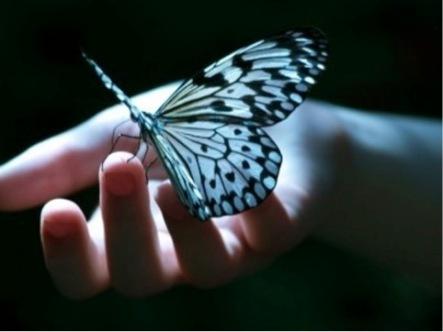 Farfalla morente