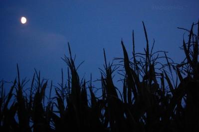 Grano notte