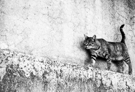 walking-cat