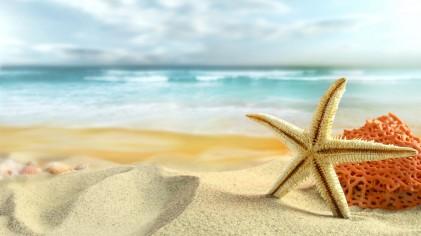 stelle-marine-e-coralli-sulla-spiaggia