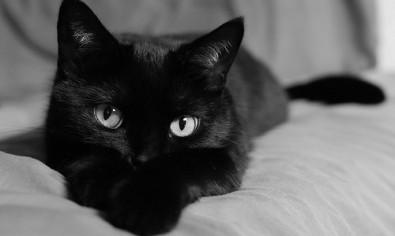 gatto-nero-500x300