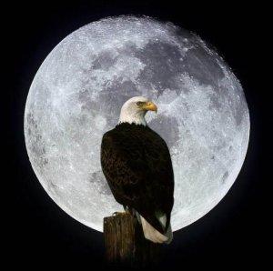 aguila-en-la-luna