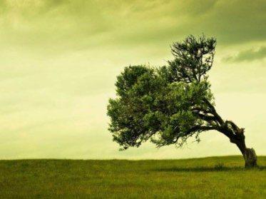 vento-tra-gli-alberi-albero-inclinato-450x337-1